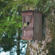 Vogelhaus «Birdy»