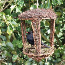 Nid d'oiseaux «Open»