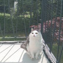 Filet de protection pour chats