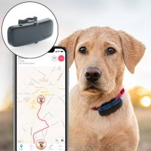Tractive GPS Aktivitätstracker für Hunde