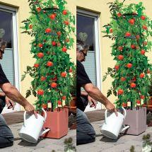 Tomaten- und Kletterpflanzenturm «Maxitom»