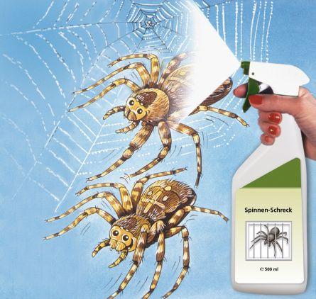 Araignée alerte