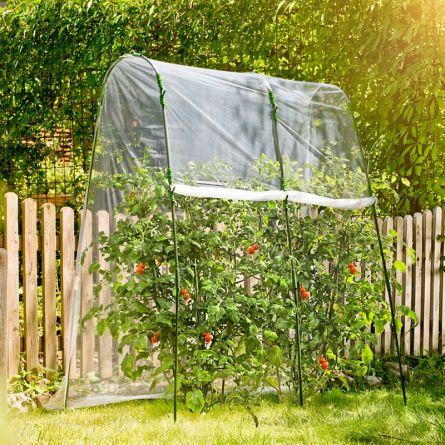 Tomaten-Folientunnel-Set