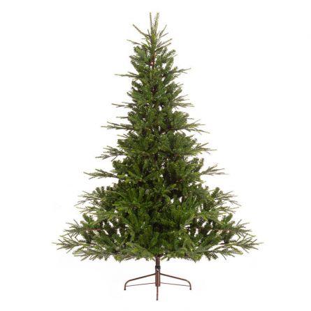 Tannenbaum «Serbian Spruce»
