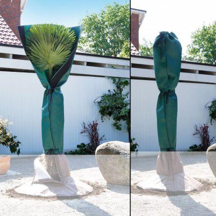 Palmenschutz